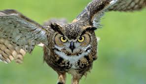 Are You the Owl – the Wisest Bird in the Office Forest?