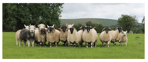 Are You the Office Lamb Who Herds the Team to Harmony?